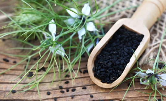Schwarzkümmel aus Ägypten